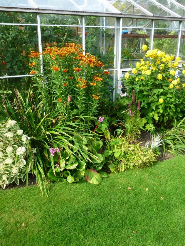 Greenhouse border in summer